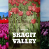 Thumbnail image for Quick Escape: See the Skagit Tulips