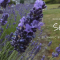 Thumbnail image for Quick Escape: Sequim on the Olympic Peninsula