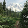 Thumbnail image for DAY TRIP: Hiking in Paradise at Mount Rainier