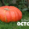 Thumbnail image for Northwest Bucket List: October