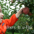 Thumbnail image for Ask TripFinder: Where to Go Apple Picking near Seattle?