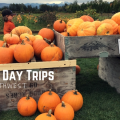Thumbnail image for Northwest Autumn Day Trips: Corn Mazes, Apple Orchards, and Pumpkin Patches