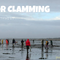 Thumbnail image for Beach Bounty: Guide to Digging for Razor Clams