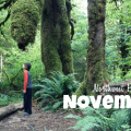 Thumbnail image for November in the Northwest