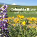 Thumbnail image for Columbia River Gorge: Cheap Sleeps and Wildflower Hikes