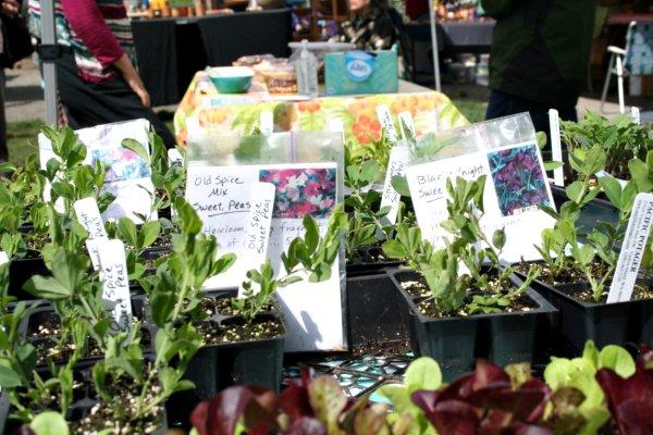 Vashon Island Farmers Market