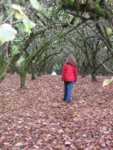 hazelnut grove