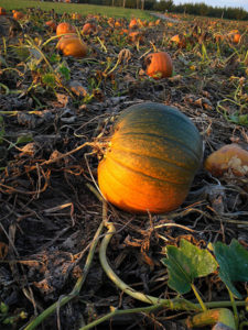 October in the Northwest: Corn Mazes, Pumpkins and Hot Cider