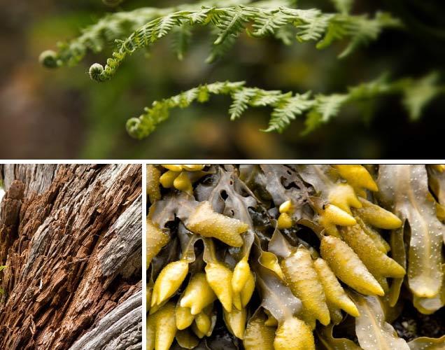 Wild Pacific Trail stunning flora details
