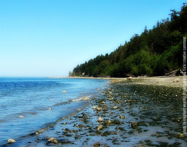"South Whidbey Island State Park beach by ""elephant wearing striped pants"""