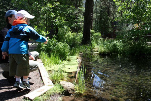Child feeding the fish for 25 cents a handful at Central Oregon's Wizard Falls Fish Hatchery on the Metolius River.