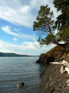 Obstruction Pass State Park Madrona (Arbutus) Tree by Jonny Hayseed via Flickr Creative Commons