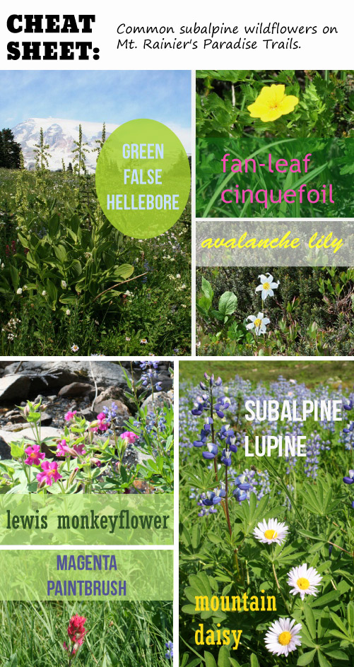 Cheat Sheet: Guide to common subalpine wildflowers at Mount Rainier