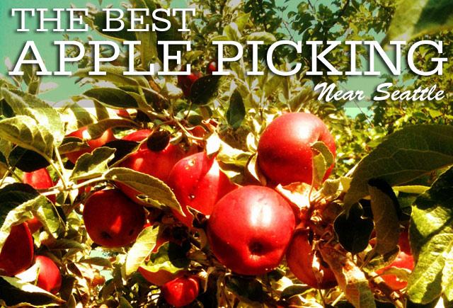The Best U-Pick Apple Orchards near Seattle