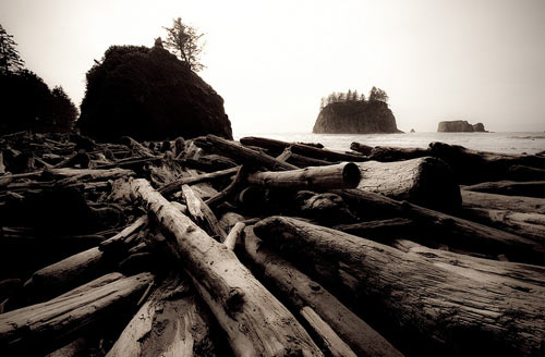 Second Beach driftwood by eleephotography