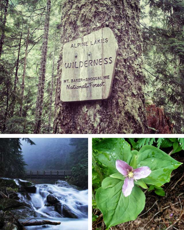 Q: Old Growth Hikes Near Seattle?