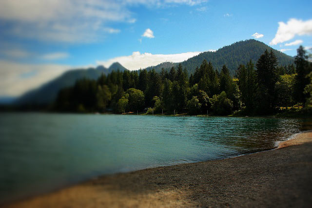 Lake Quinault shoreline by Quiltsalad