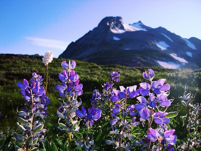 HIKE: Cascade Pass, North Cascades National Park