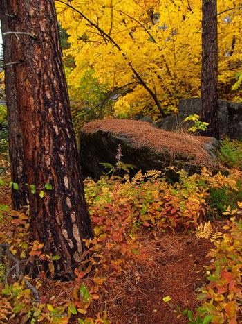 CAMP & HIKE: Icicle Creek Canyon near Leavenworth, Washington