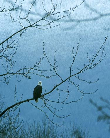 Quick Escape: Go See the Skagit Bald Eagles
