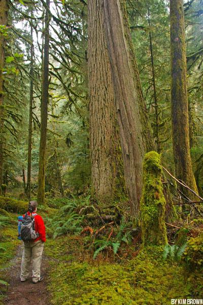 GO: Carbon River Rain Forest in Mt. Rainier National Park
