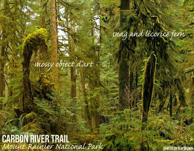 GO: Carbon River Road Trail, Mt. Rainier National Park
