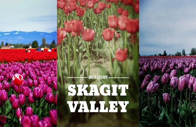 SkagitTulips_Escape640