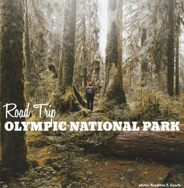 Road Trip: Olympic National Park