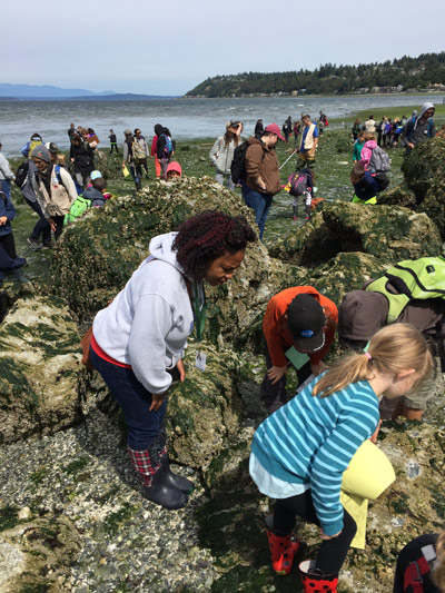 Tide Pool Party Where To Spot Cool Marine Life Near Seattle