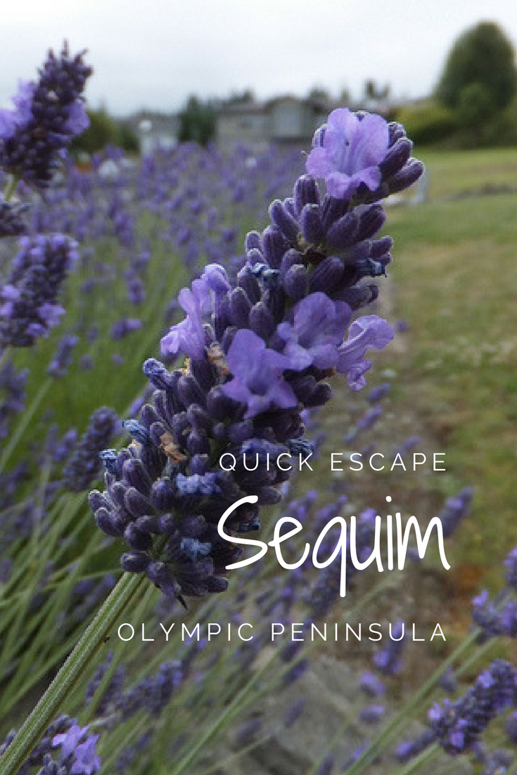 Quick Escape: Sequim on the Olympic Peninsula | Northwest