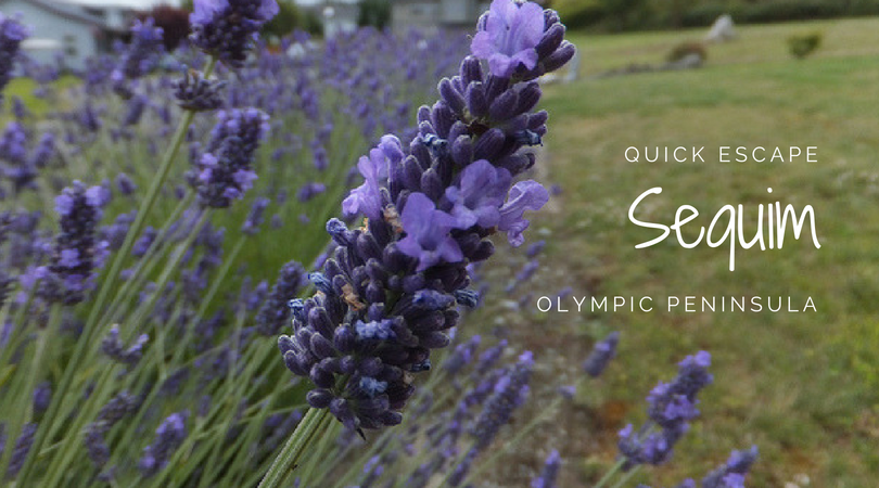 Quick Escape: Sequim on the Olympic Peninsula