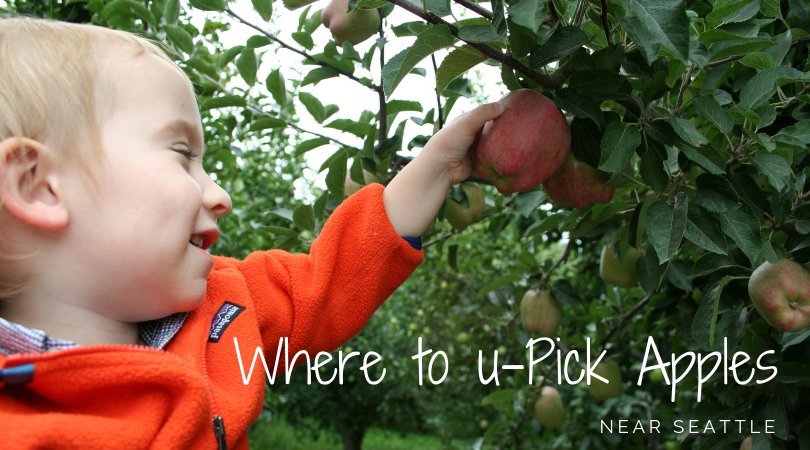 Where to U-Pick Apples near Seattle