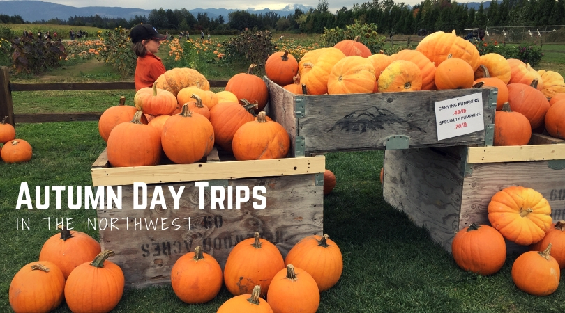 Northwest Autumn Day Trips: Corn Mazes, Apple Orchards, and Pumpkin Patches