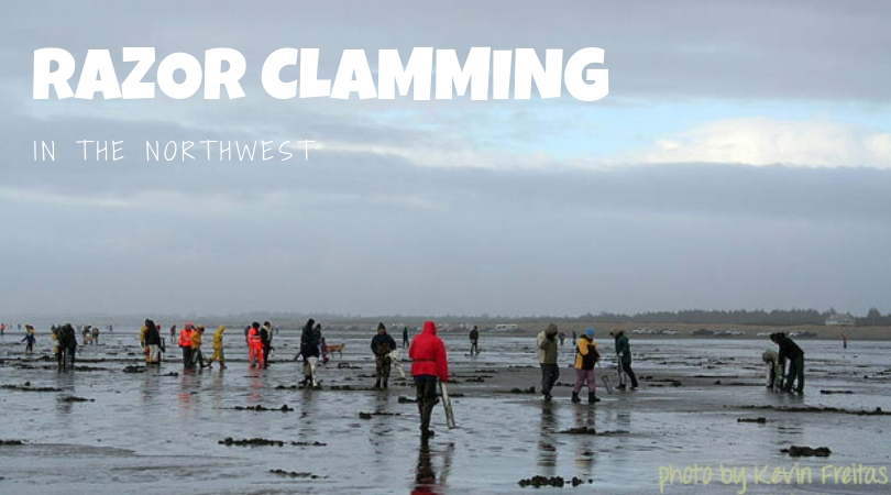 Beach Bounty: Guide to Digging for Razor Clams