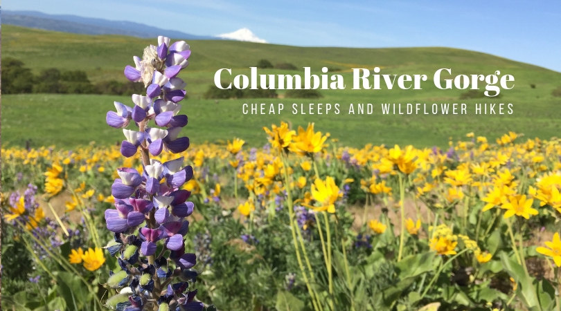 Columbia River Gorge: Cheap Sleeps and Wildflower Hikes