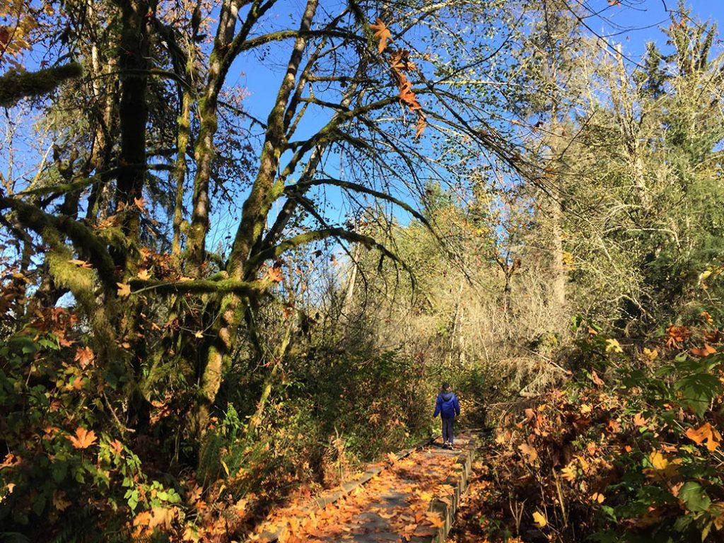 Fall color at Evans Creek Preserve