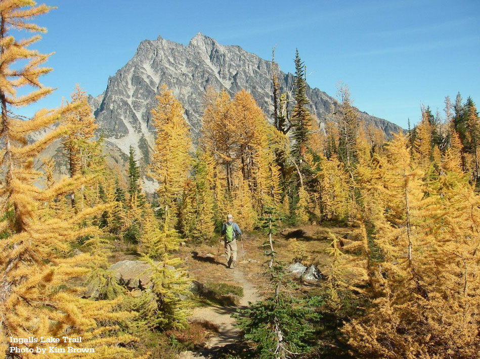 Larches on the Ingalls Lake Trail, by Kim Brown